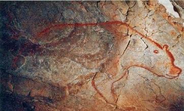chauvet cave bear